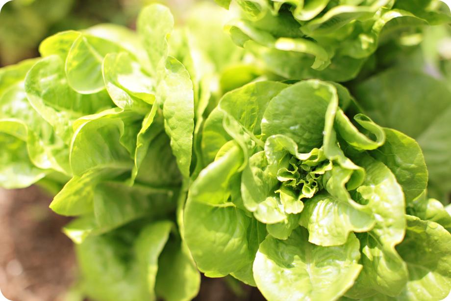 farm-shots_014.jpg