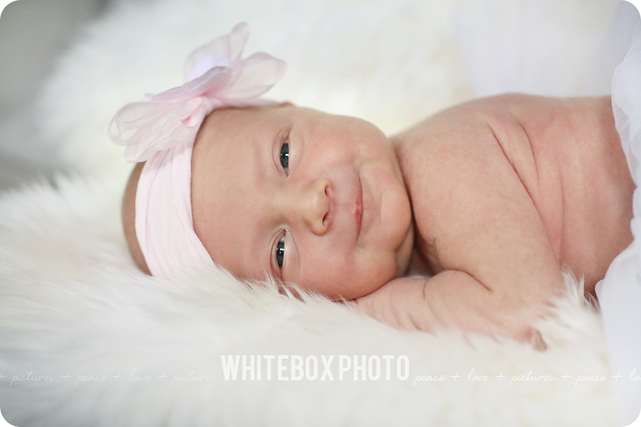 charlie's in-home newborn photo session by whitebox photo.