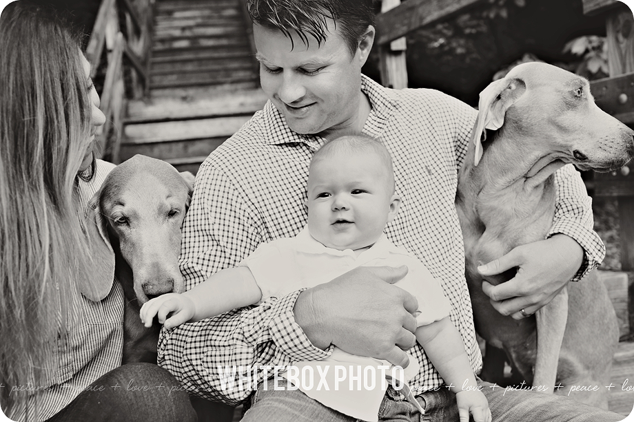 will's 6 month photo session in raleigh area by whitebox photo.
