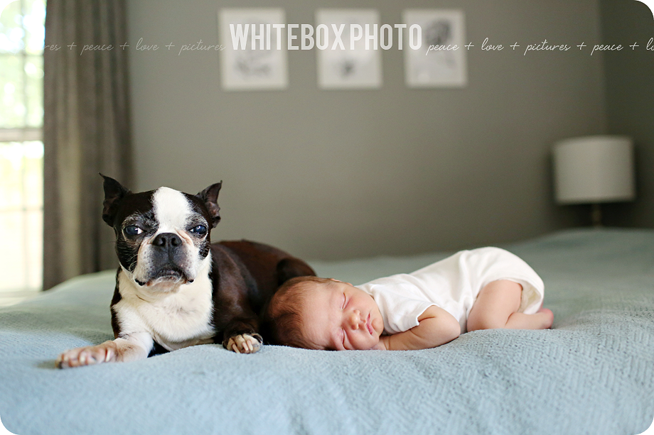 cousin william's newborn session in their home by whitebox photo 2017.